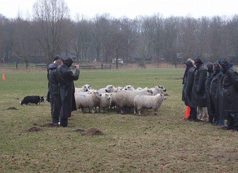 schapendrijf uitje friesland