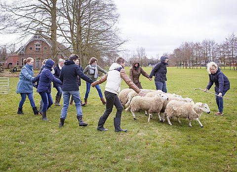 schapendrijven training