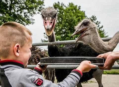 kinderen stuisvogels voeren