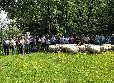 trainen met schapen