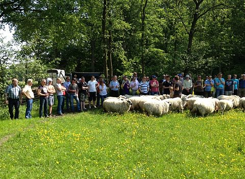 demo schapendrijven
